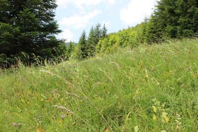 bei uns gibt es noch richtige Wiesen mit vielen Wildblumen